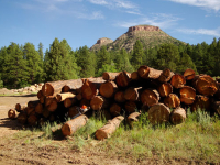 Twin Buttes Lumber Stock Pile